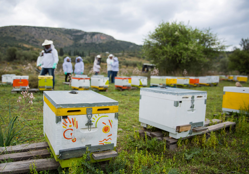 Beekeeper for a day in Nafplio